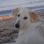 великолепная блондинка delaisxa.ru7